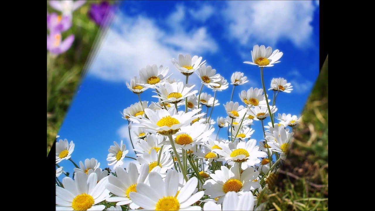 Naturaleza flores silvestres hd 3d arte y jardiner a - Jardines con rosas ...