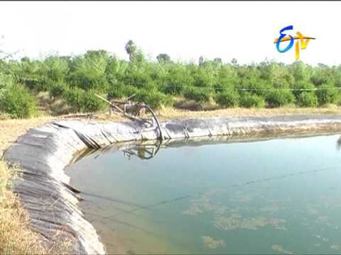 Farm ponds in agriculture fields for water storage and harvesting