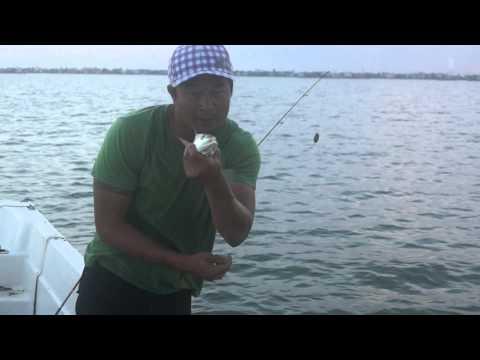 Steven Mai Fishing Show ( Cá Đù Vàng  )