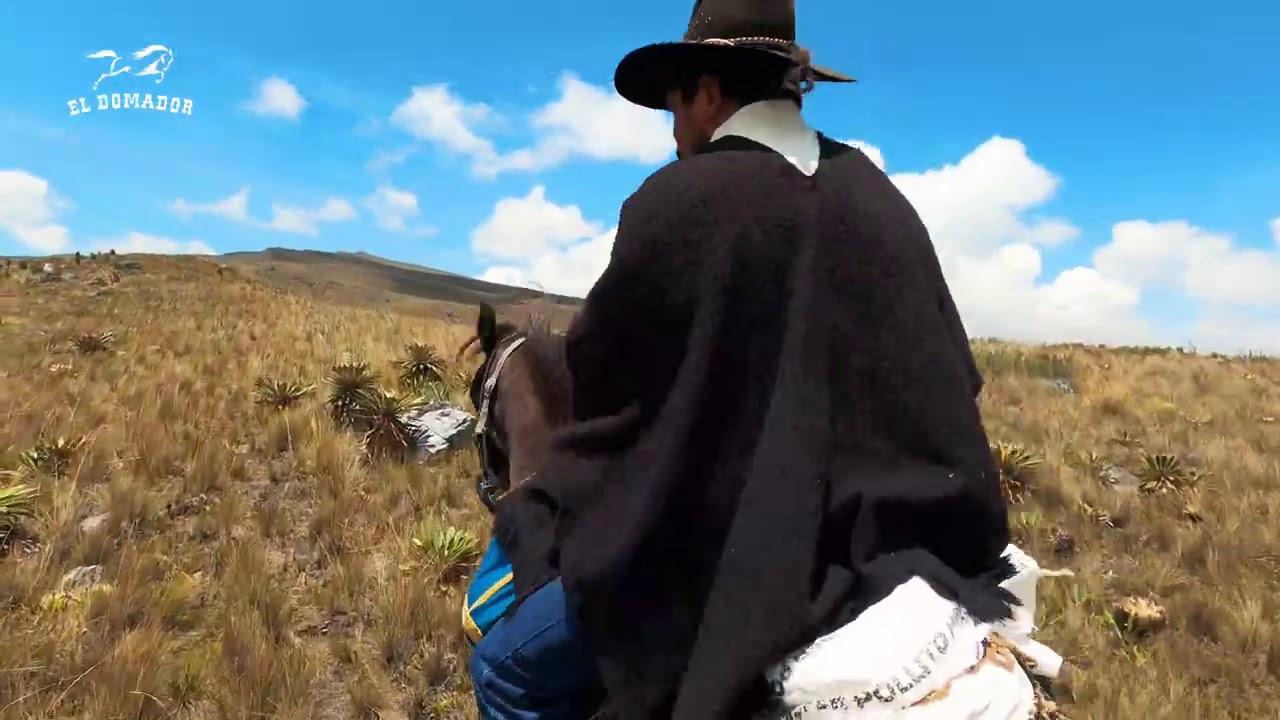 Buscando Caballos Salvajes en los Páramos de Colombia | Wild Horses