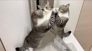 見知らぬ猫が2匹現れて混乱してる猫がこちらですw