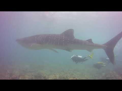 maldives-aggressor-ii-dive-trip-may-2018