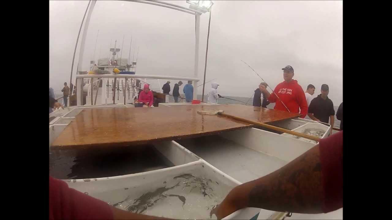 Seaforth san diego fishing calico madness youtube for Seaforth sportfishing fish counts