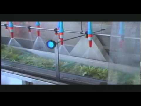 vegetable wash machine