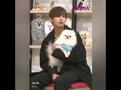 Taehyung Dog