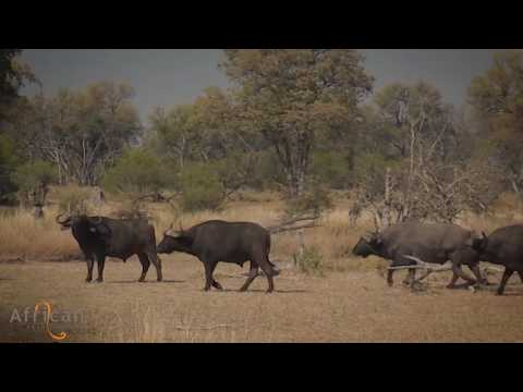 A Day on Safari with African Bush Camps