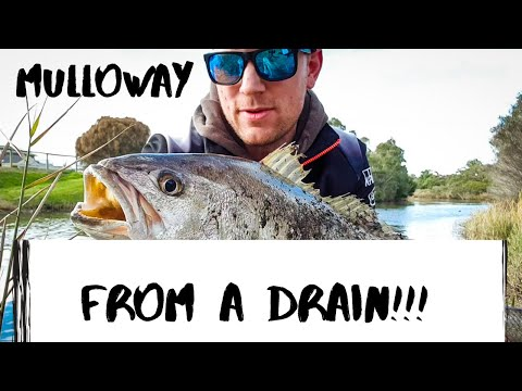 Melbourne Mulloway Fishing| I Jagged A Jewy On Bream Gear!!!
