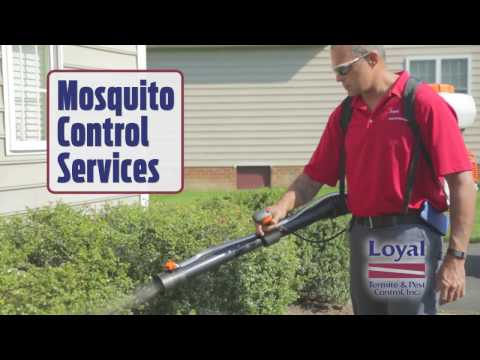 Loyal Mosquito Control Services