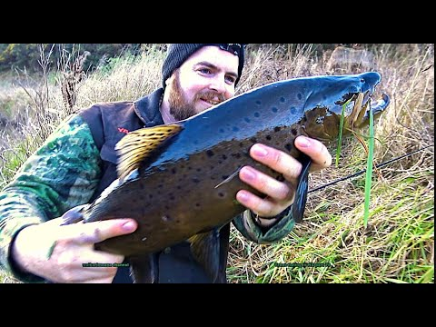 #waikarimoana Trout Fishing With Flies And Spinner In Rivers And Lakes In New Zealand Part 76