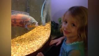 Funny Kid At Aquarium -  Funny Baby's Outdoor Moments