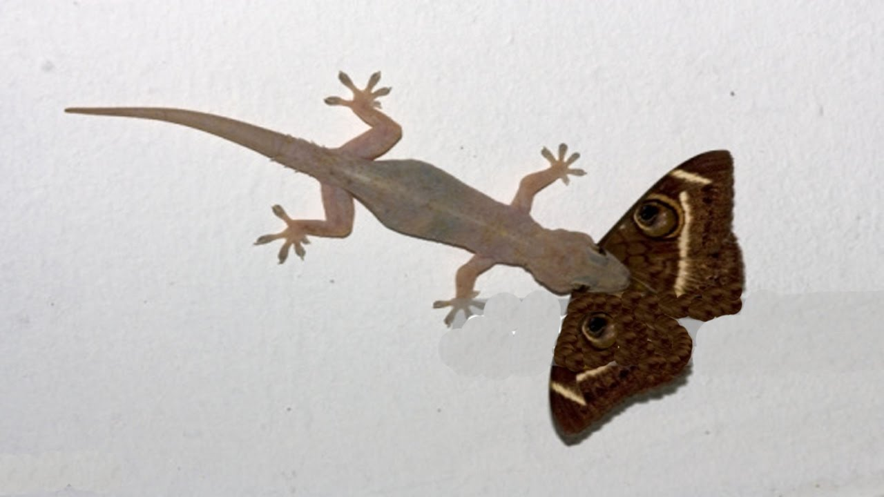 House Lizard | www.pixshark.com - Images Galleries With A ...