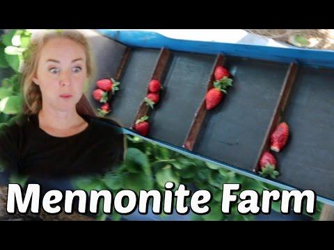 Dream of a Mennonite Farm