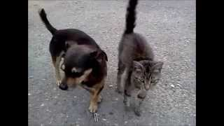 Funny CAT vs.DOG.Котопес.Прикольные. Кот ласкается. Веселый котик.