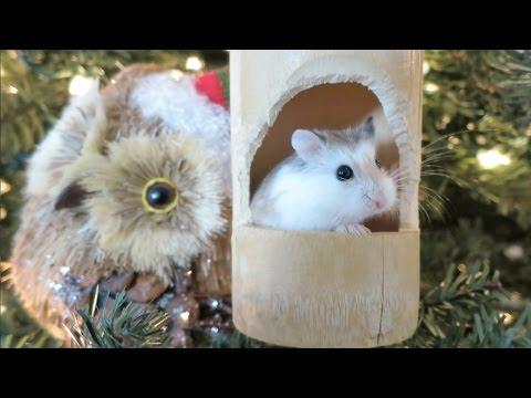 Hamster Christmas Ornament! - Hamster Christmas Ornament! - YouTube