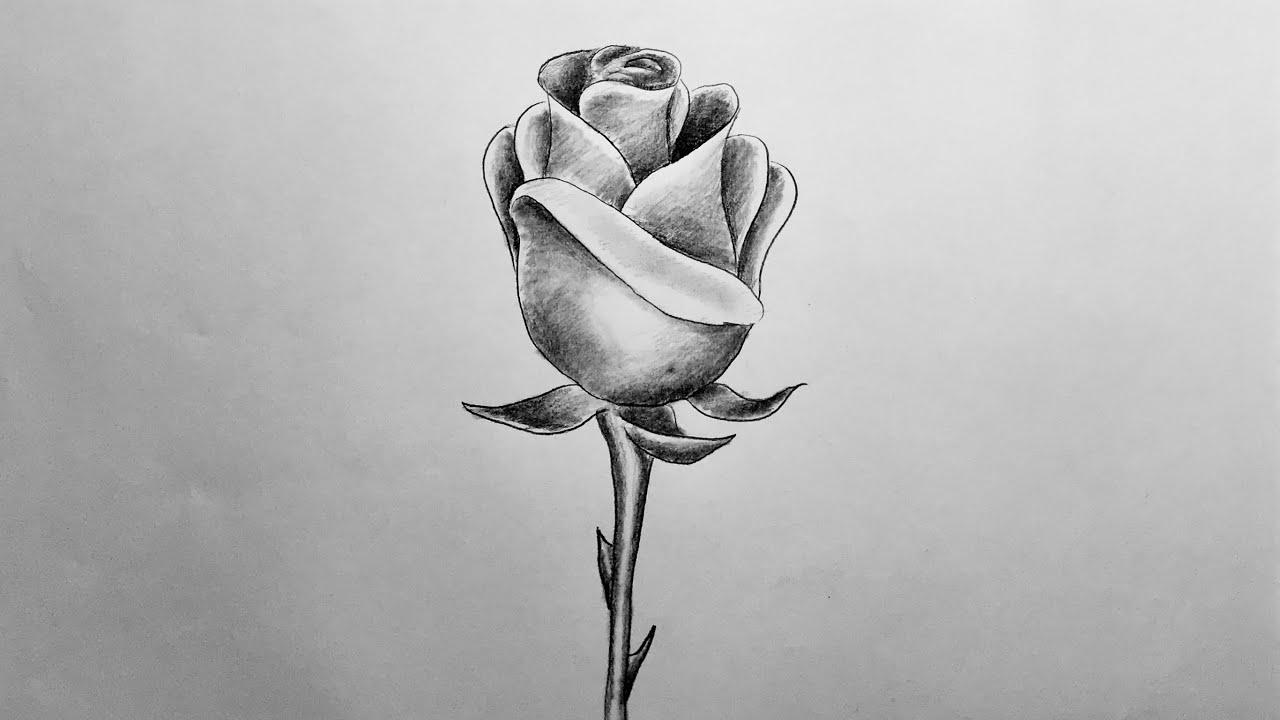 Gül Resmi Nasıl Çizilir   Karakalem Gül Çizimi   Rose Drawing