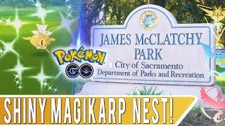 MAGIKARP NEST SHINY HUNTING! Pokémon GO Organic Grinding at McClatchy Park Sacramento