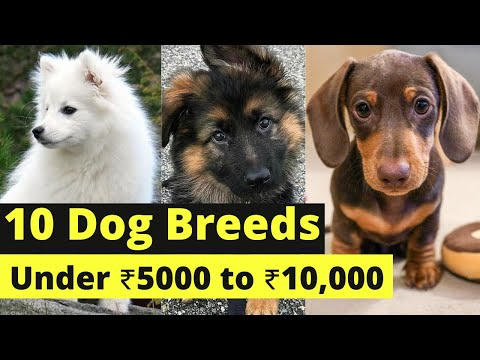 Dog price in India 2019 l Dog under 10000 Rs l Dogs price list Rs 5000 l  Cost of Budget dogs