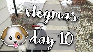 VLOGMAS 2016 | Day 10 | ADOPTING A DOG!