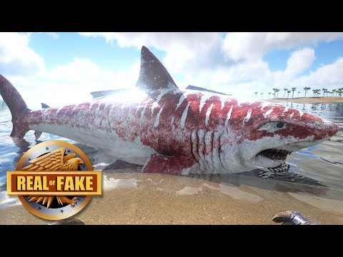 BA MEGALODON ON BEACH  real or fake?
