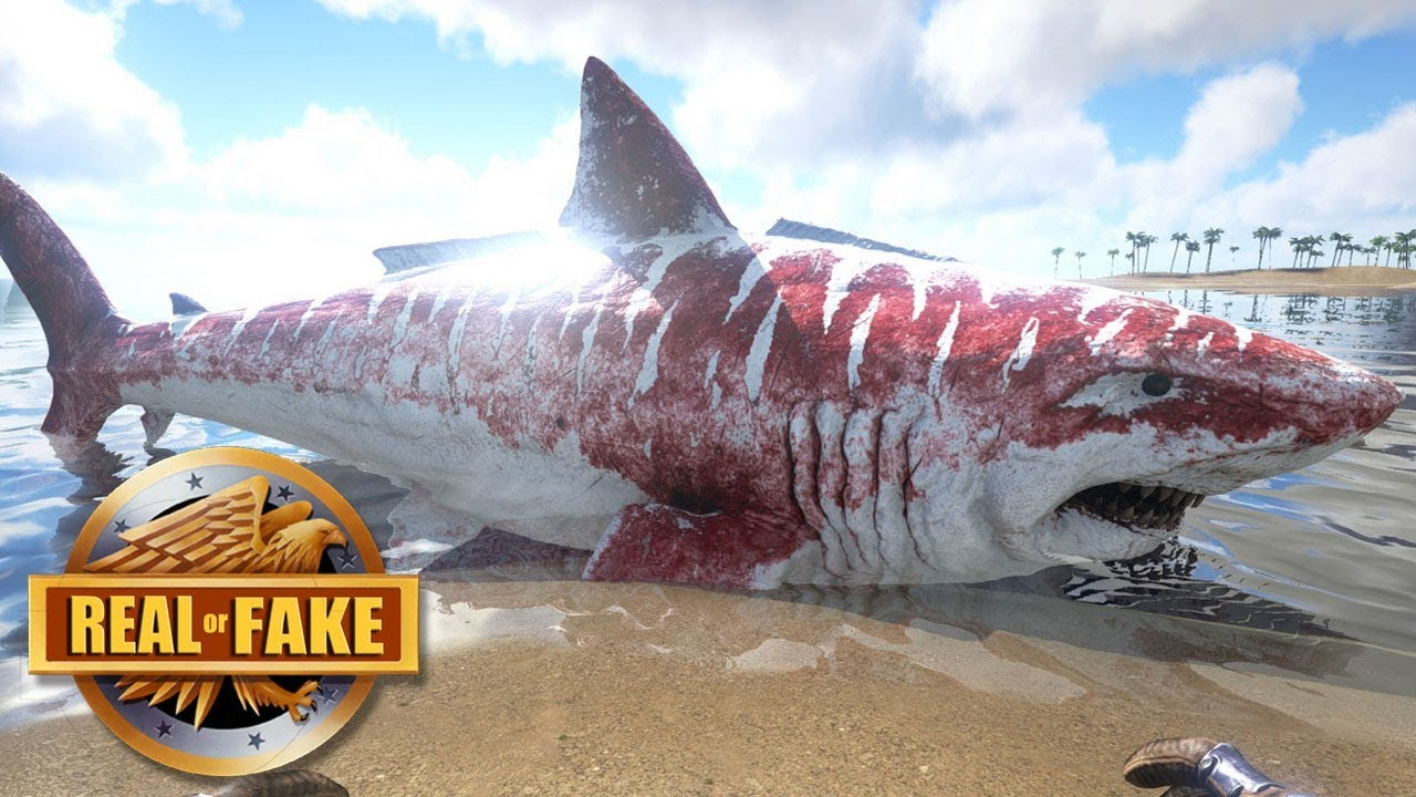 BABY MEGALODON ON BEACH - real or fake? - YouTube