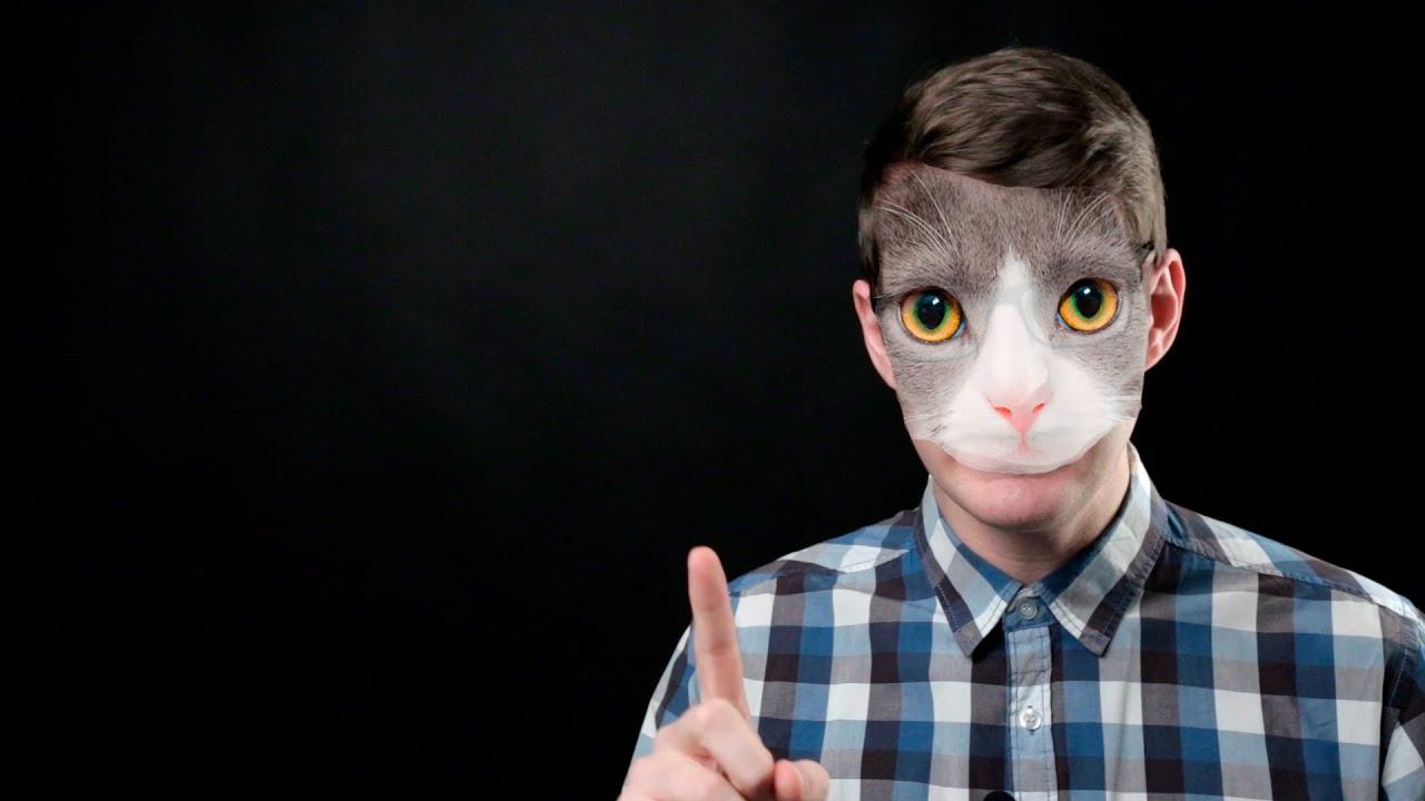 Про удивленных котов и российскую