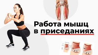 Работа мышц в приседаниях