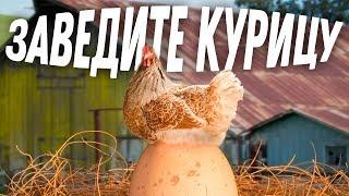 Почему вам СТОИТ завести курицу? | Школа начинающего птицевода