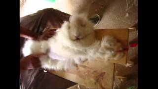 Never-Before-Seen Footage: Angora Fur Exposé