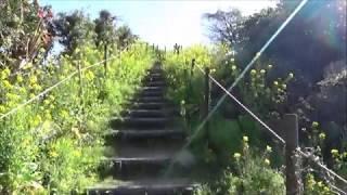 円山花木園の菜の花