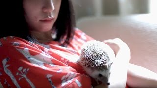 神田莉緒香 - 走れハリネズミ