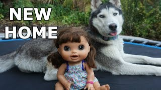 BABY ALIVE New Home! Baby Alive Videos!
