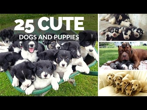 25 Cute Dogs And Puppies | Dogs with Puppies