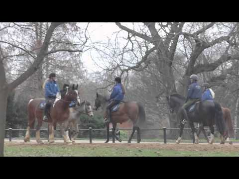 Horse Riding Hyde Park London