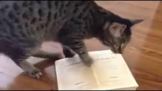 У нас даже кошки знают про ПУШКИНА Ответ Ксении Собчак и Навальному!