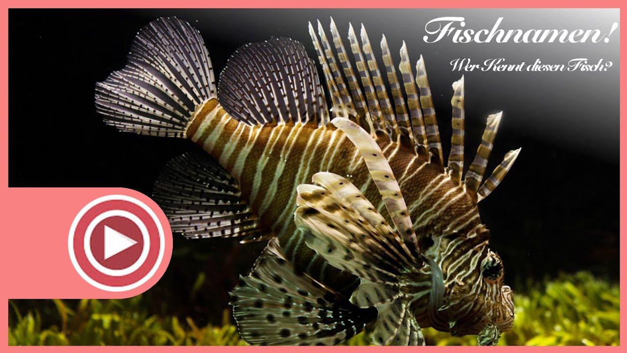 Bilder von fischarten im aquarium unbekannte fischnamen for Fische arten