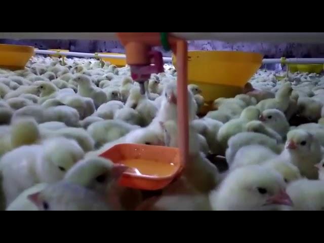 Peternekan ayam modern, kandang close house menggunakan teknologi modern, terima pesanan exhaust fan