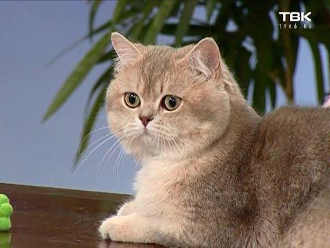 Как успокоить мартовского кота?
