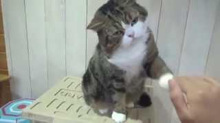Коты бывают разные )
