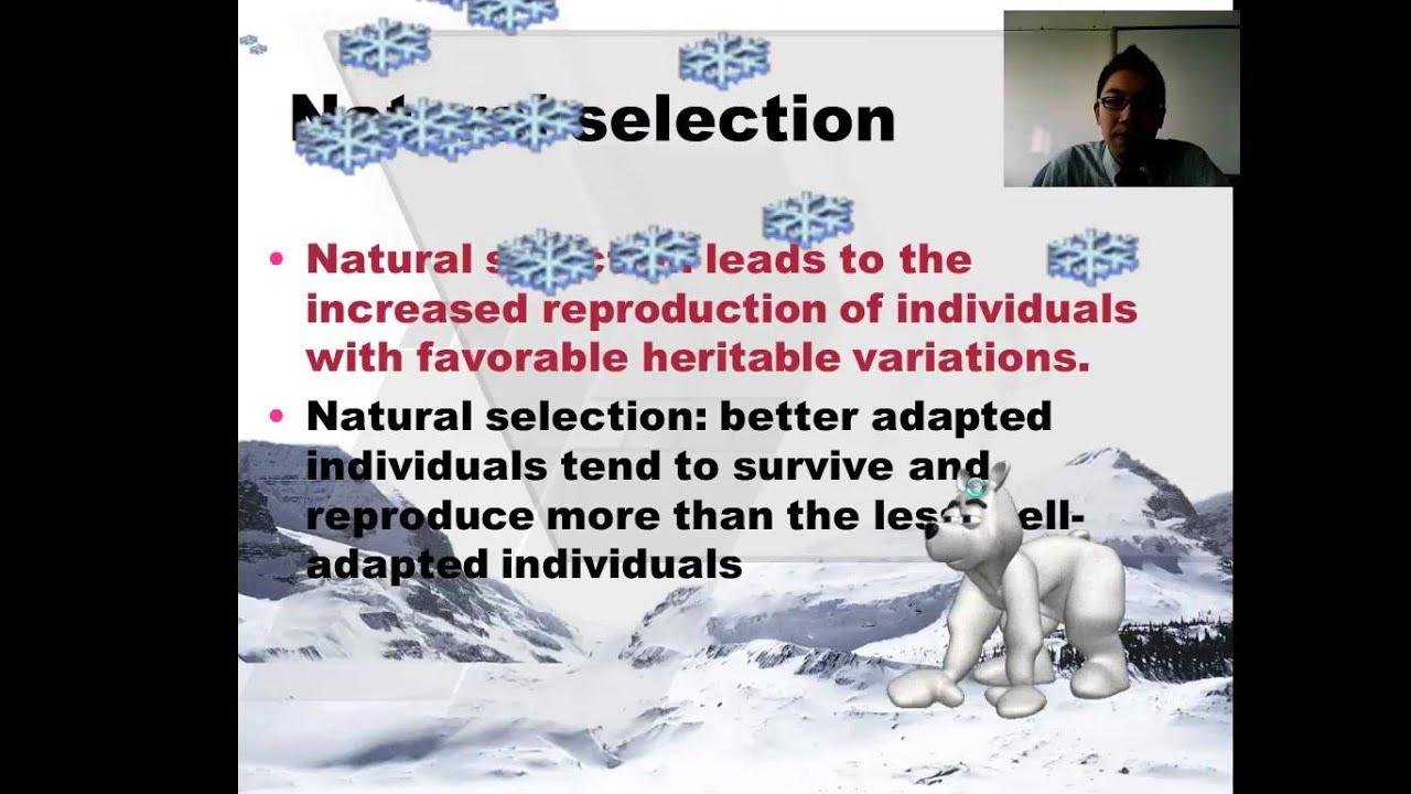Evolution  Ib Biology  Part 1