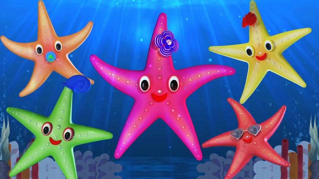 Etoile De Mer Doigt Famille Starfish Finger Family Baby Toons