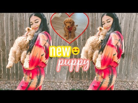 A Day In My Life || New Goldendoodle Puppy