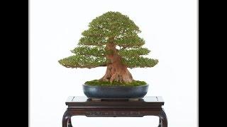 国風盆栽展は、日本盆栽協会が毎年2月に東京都美術館で開いている日本...