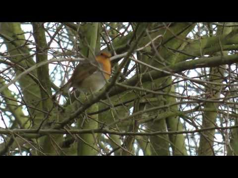 My Visit to Worsbrough Mill and Country Park 27/1/14
