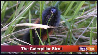 The Caterpillar Stroll