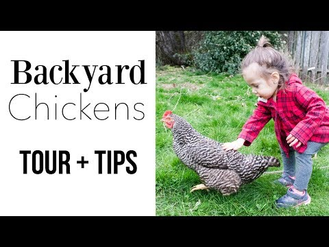Backyard Chickens Coop Tour and Setup for Laying Eggs