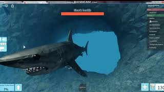 Shark Chase in Roblox