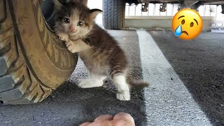 😿 10 Most Excİting Animal Rescues 🐶