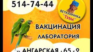 видео Вызов ветеринарного врача на дом Киев, ветеринарная клиника