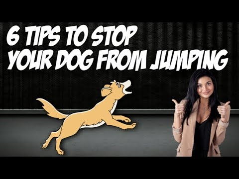 6-tips-on-how-to-stop-your-dog-from-jumping-🐶-dog-training-usa.net