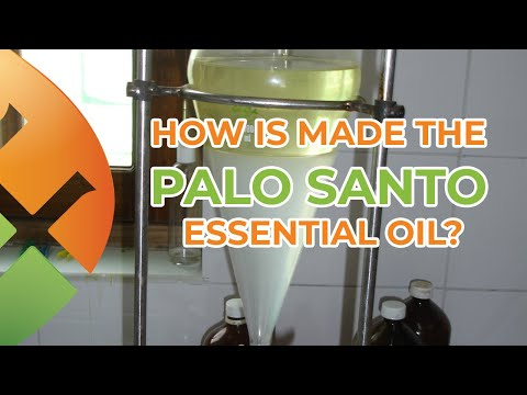 how-is-made-the-palo-santo-essential-oil?-|-palo-santo-wood